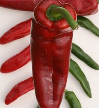 Begun over 40 years ago as a fundraiser for the local high school's Future Farmers of America club, the Hatch Chile Festival attracts about 30,000 ...