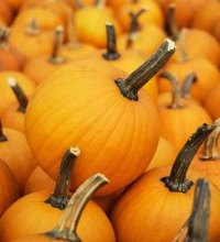 A staple in many American kitchens during the cool months, pumpkin also makes a healthy addition to your diet year-round. Pumpkins count toward your ...