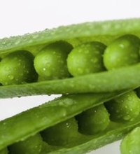 The refreshing crispness and crunch of a sugar snap pea comes from its high water content. Sugar snap peas, sometimes called snap peas or sugar peas, ...