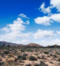 The Mojave Desert is a vast area of hostile sand flats, mountain peaks and unexpected wildflower blooms stretching through California, Arizona, ...