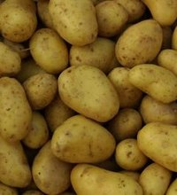 A staple in the average American diet, potatoes contribute to your recommended starchy vegetable intake -- 5 to 6 cups weekly, according to the U.S. ...