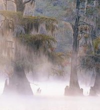 Caddo Lake is a pristine, natural environment encompassing more than 26,000 acres along the Texas and Louisiana border, and is home to one of the ...