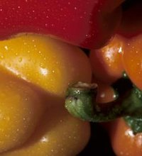 The pigment that makes red, yellow and orange bell peppers so colorful also contains health-giving properties. These vividly colored vegetables are ...