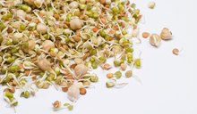Why Not Eat Raw Alfalfa Sprouts?