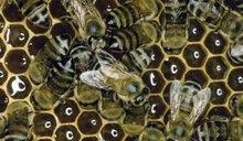Benefits of a Honeycomb