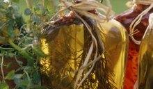 Balsamic Vinegar Diet