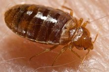 How to Kill Bed Bugs With Alcohol