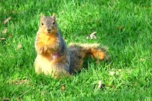 How to Get Rid of Ground Squirrels Naturally