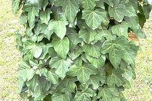Can I Get Relief from Poison Ivy in a Swimming Pool?