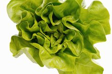 Types of High Soluble Fiber in Lettuce