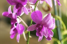 Allergic Reactions to Orchids