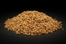 Allergy to Fenugreek