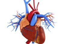 Elevated Cardiac Enzymes and Troponin