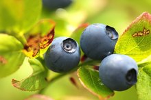 Do Blueberries Have Potassium?
