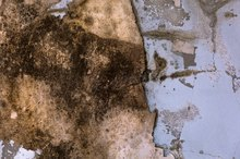 What Are the Dangers of Mold in a Basement?