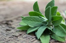 Sage & Weight Loss