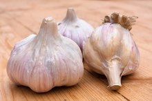 Garlic for High Triglycerides