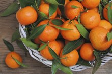 Mandarin Oranges and Allergies
