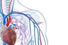 What Are the Three Major Parts of the Cardiovascular System?