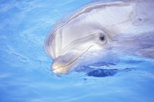 Swimming With Dolphins in Destin, Florida