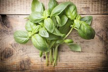 Basil Leaf Tips Are Browning & Curling