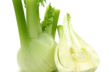 My Fennel Allergy