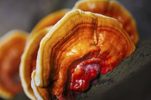 How to Use Ganoderma for Arthritis