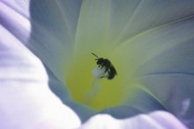 How to Treat a Sweat Bee Sting