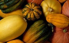 Can Eating Squash Help Me Lose Weight?