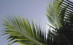 How to Trim Queen Palm Trees