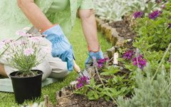 How Long Should I Wait to Plant Flowers After Using Weed Killer?