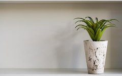 Indoor Plants That Thrive on Neglect