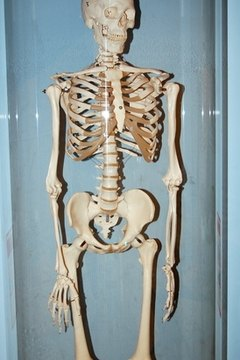 Skeletal system projects provide students with opportunities to explore how bodies function.