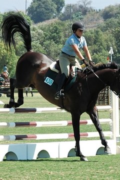 Encouraging hair growth can help your horse look its best all the time.