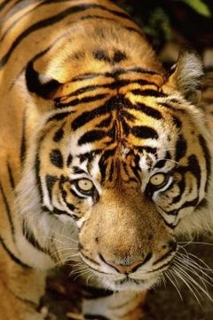 Talks about the decreasing tiger population appeal to all ages.