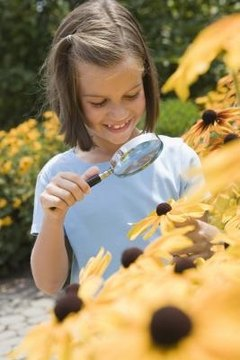 Magnifying glasses have a variety of uses, from studying nature to medical research.