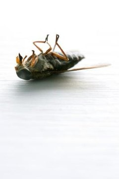 The greenhead horsefly is extremely difficult to kill.