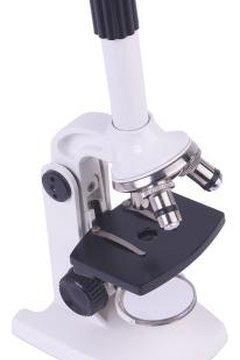 Single-eyepiece microscopes are found in most schools