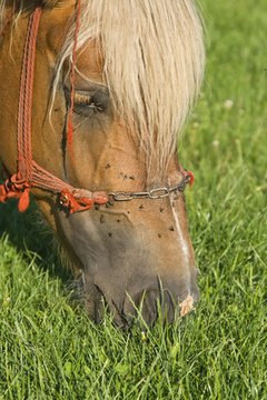 How to Make Your Own Horse Insect Spray With Essential Oils