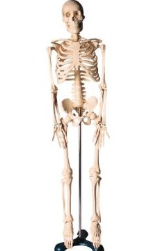 """Think of the outline as the """"skeleton"""" of your content."""