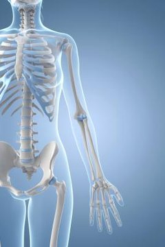 Mnemonics can help students remember the bones of the human body.