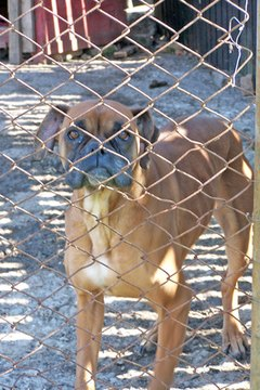Chain-link is a safe type of fencing for you dog.