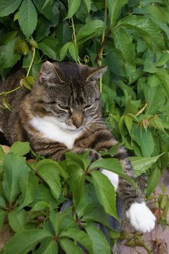 Cats are drawn to the scents and textures of many household plants.