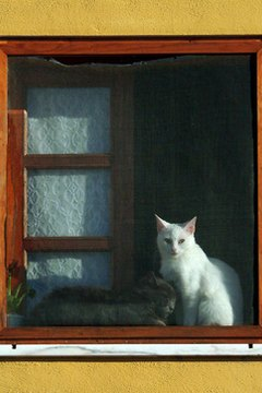 Cats love to perch in windows.