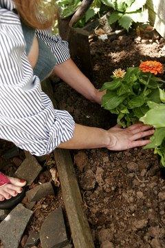 Mondo grass adds interest to gardens and pathways.