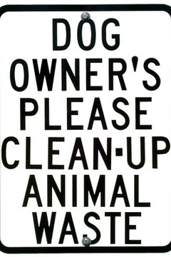 Bring along a plastic bag to clean up dog poop in public places.