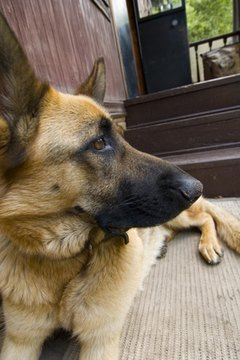 Dogs Will Keep Ing On Old Urine Stains