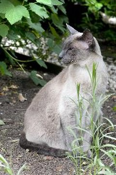 A number of herbs can be used for treating cats.