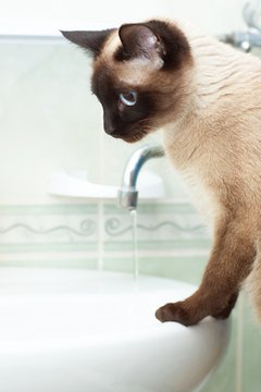 If your cat is constantly seeking out water, he may have an underlying health issue.