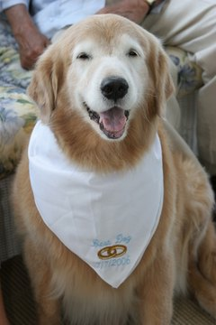 Dog bandanas can be for everyday wear or for special occasions.